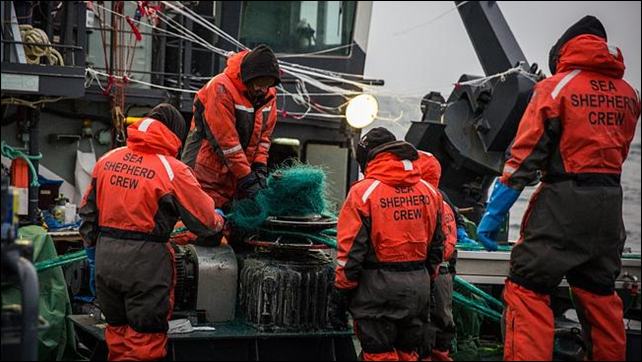 Crew aboard the Sam Simon during a retrieval operation of an illegal 25 kilometer gill net set by the notorious toothfish poaching vessel, the Thunder. Photo: Jeff Wirth / Sea Shepherd Global