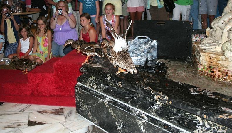 peabody-ducks-9