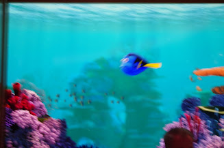Dory swims by