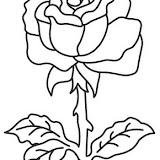 rosa%25203.jpg