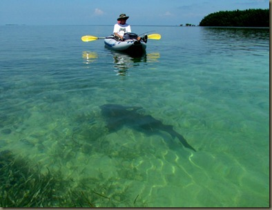 Al kayaking with nurse shark in they keys