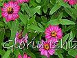 Glória Ishizaka -   Kyoto Botanical Garden 2012 - 87