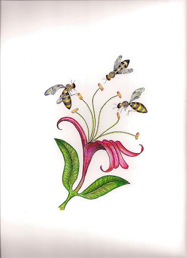 Hummingbird And Honeysuckle Tattoo Honeysuckle tattoo design 2007