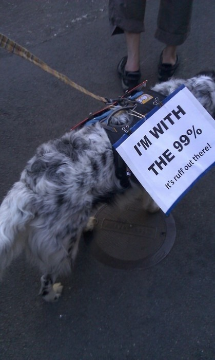 cute-pets-at-occupy-wall-street-13