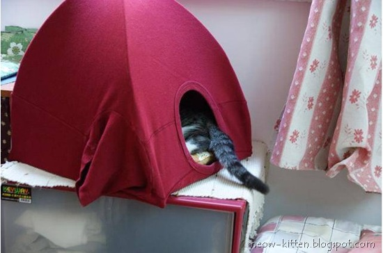 DIY cat tent with old t shirt 4