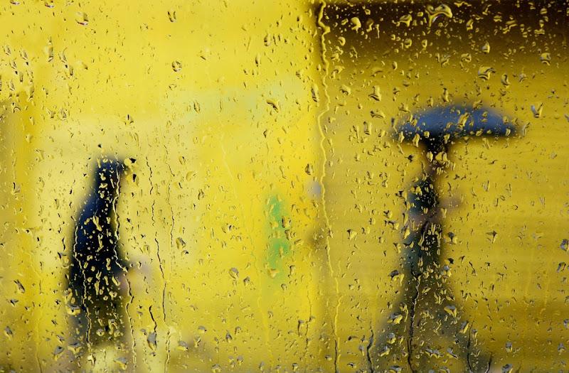 yellow_003.jpg