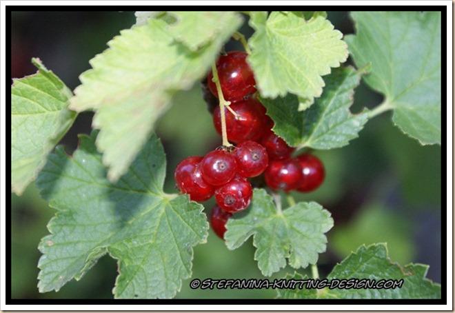 Redcurrant