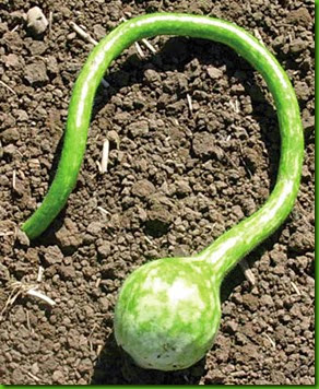 Extra long dipper gourd
