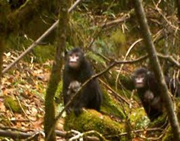 Amazing Pictures of Animals, photo, Nature, exotic, funny, incredibel, Zoo, Myanmar snub-nosed monkey, Alex (7)