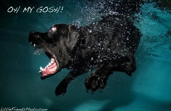 under-water-dog7-600x389