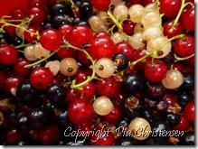 røde og hvide ribs, samt solbær