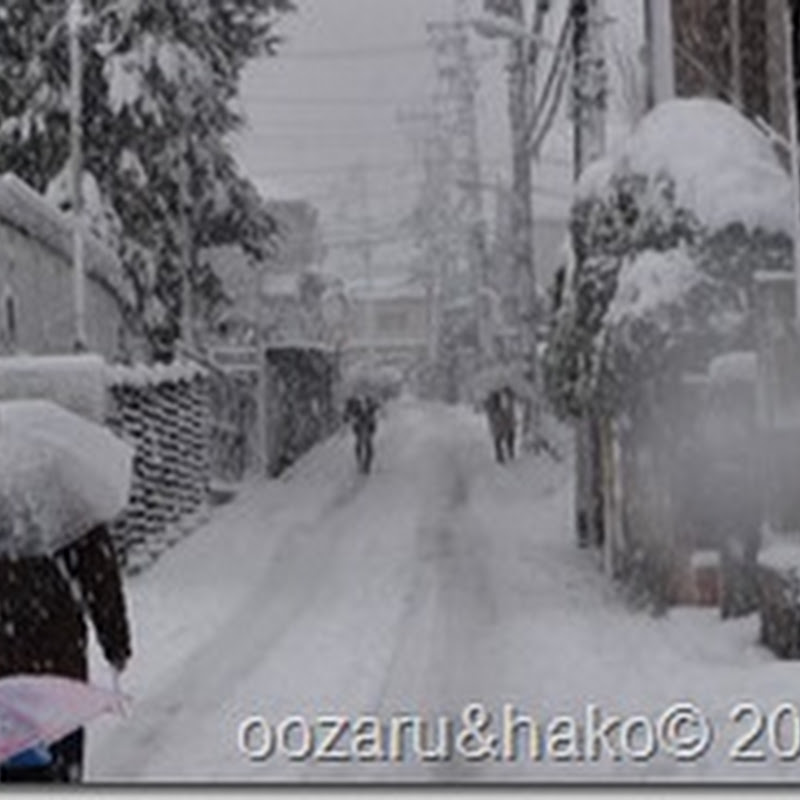 Primera nevada 初雪