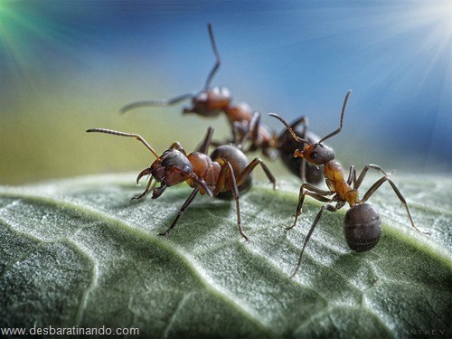 formigas inacreditaveis incriveis desbaratinando  (38)
