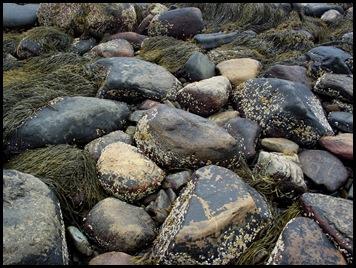 Ocean hike Camden Hills 035
