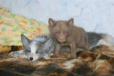 Different wild animals together - photo#20