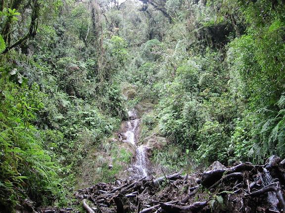 Yungas : sur la route de Coroico, près des cascades de Sacramento Alto (2700 m). Bolivie, 11 janvier 2004. Photo : Peter Møllmann