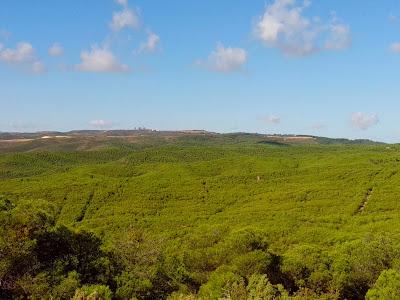 pinar de Zuera la palomera