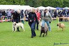 20100513-Bullmastiff-Clubmatch_31024.jpg