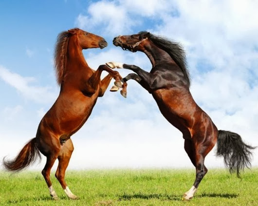 1320292687_europe-horses_thumb[5]