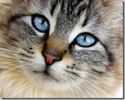 occhio gatto