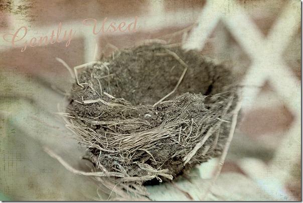 gently used birds nest