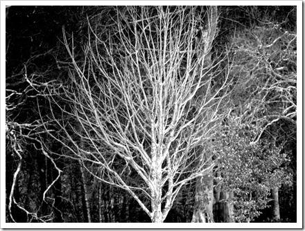 11 Dec 10 05-12-2011 15-40-11.ORF
