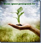 prosperidade 320460