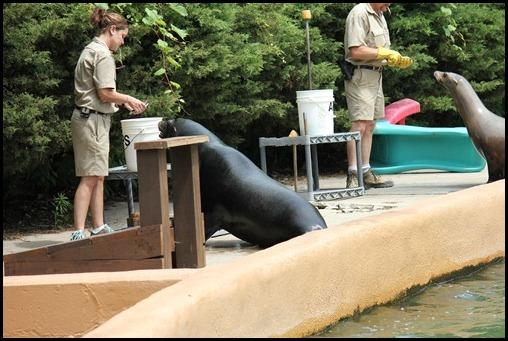 Zoo4 400