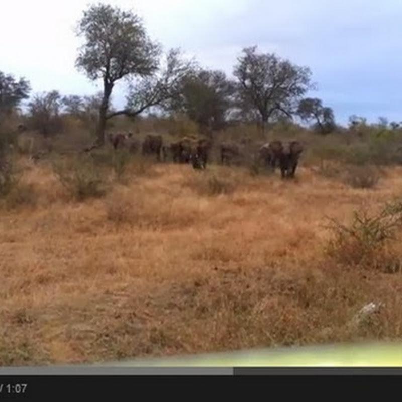 Επίθεση από ελέφαντες