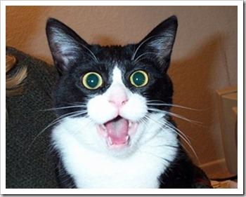 cat-shock