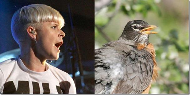 pop-stars-birds-12