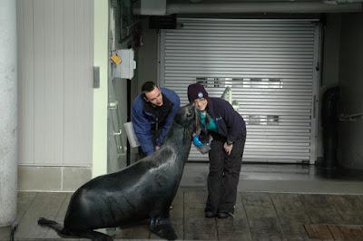オットセイ(fur seal)のキス