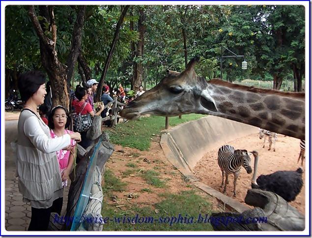 น้องโซเฟียไป เที่ยวสวนสัตว์  นครราชสีมา