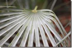 nybg-new-york-botanic-gardens-bronx-018