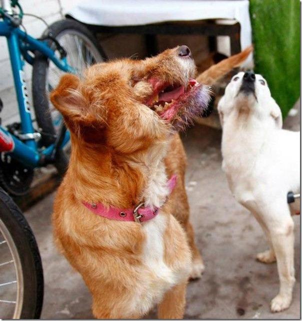 História incrível do salvamento de um cão (10)