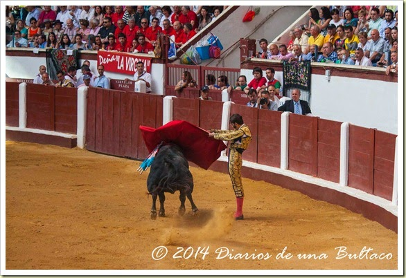 Toros 2014 (1)-29