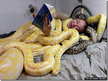 ular ori
