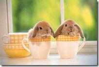 conejos pascua (36)