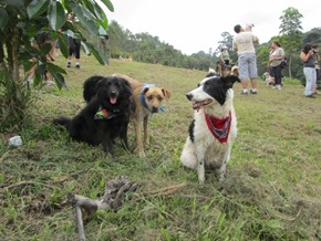 pepper, pety e tico