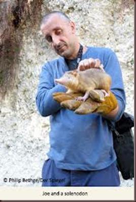 Amazing Pictures of Animals, photo, Nature exotic, funny, incredibel, Zoo, Solenodon, Mammalia, Alex (5)