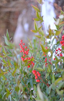 emerald in garden amy renea against red