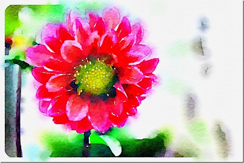 flower waterlogue