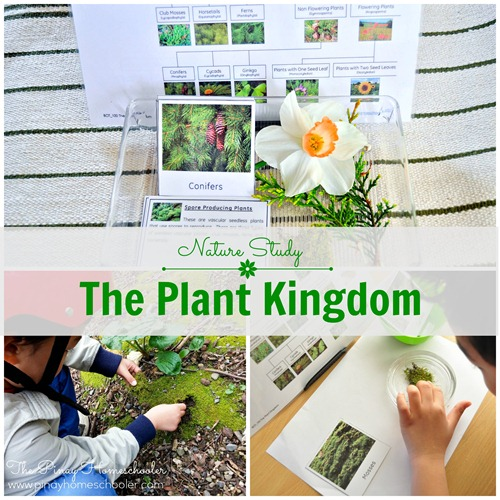 Plant Kingdom FB