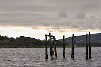 Luca_vanDuren_Cormorant at Salen harbour-Mull.jpg