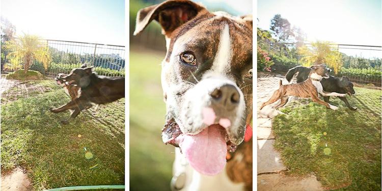 puppy visit 4