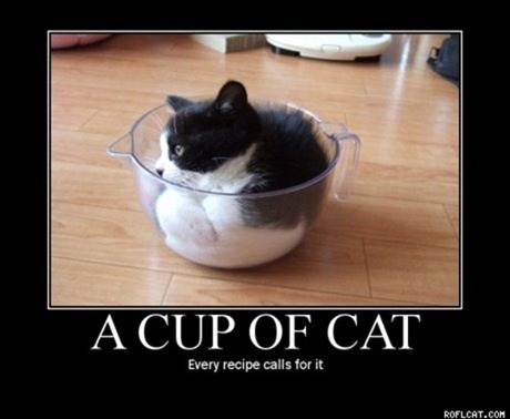 thumb_A_Cup_Of_Cat
