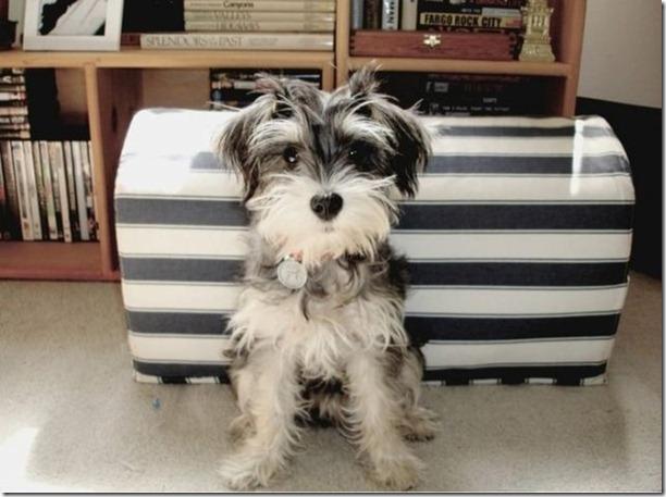 cute-puppies-awww-23