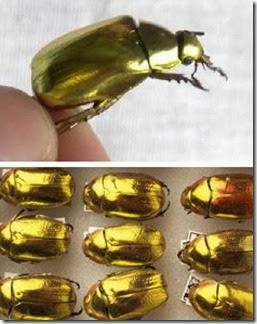 Gold_Animal_1b