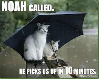 rainy cats
