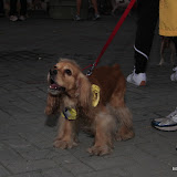 Pet Express Doggie Run 2012 Philippines. Jpg (9).JPG